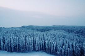 Эксперт: Внутрироссийская миграция приведет к вымиранию Сибири и Дальнего Востока