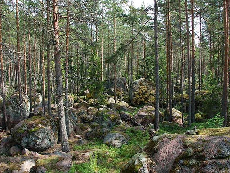 Карельские пословицы про дерево и лес