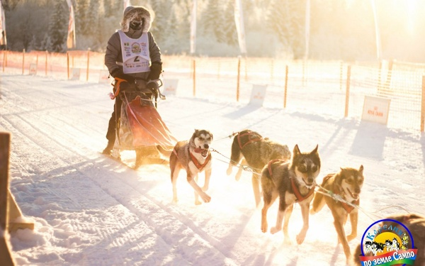 """Международные гонки на собачьих упряжках """"По земле Сампо"""" пройдут в Карелии"""