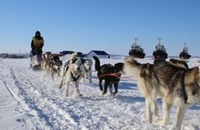"""Участники гонки на собачьих упряжках """"Берингия"""" добрались до финиша"""