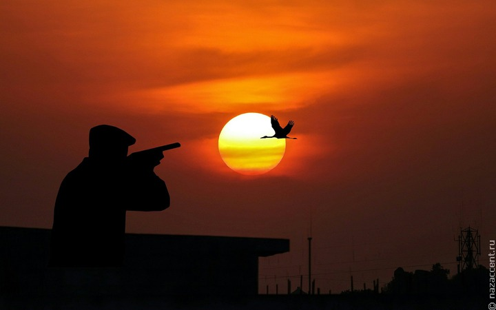 На Чукотке завели дело на убившего гусей ради фотографии охотника