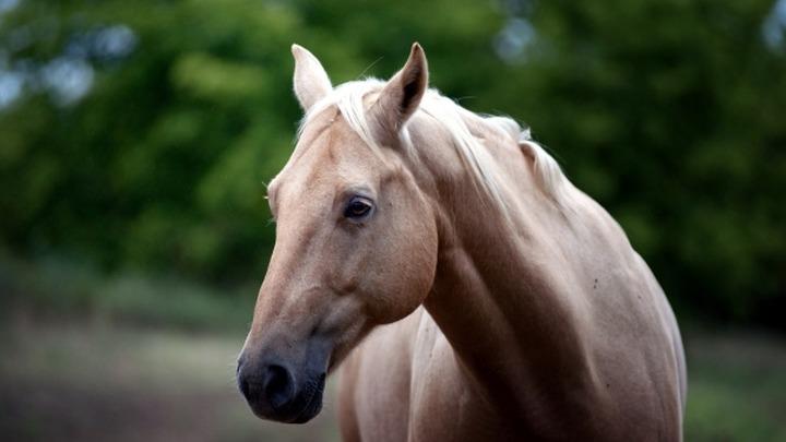На национальных конных скачках в Туве серьезно пострадал девятилетний мальчик