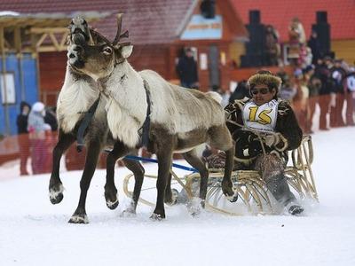 Лучшему оленеводу Камчатки вручили снегоход