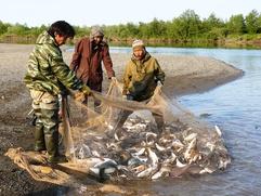 Мурманские саамы столкнулись с запретом ловить рыбу сетями