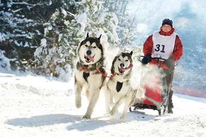 В гонках на собачьих упряжках в Хабаровске аборигены участия не приняли