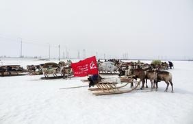 """Акция """"Бессмертный аргиш"""" в честь оленно-транспортных батальонов прошла на Ямале"""