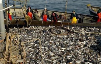 Эксперт: Из КМНС рыбачить может только каждый пятый