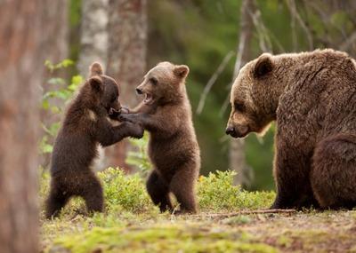Реестр носителей традиций медвежьих культов предложили создать на Арктическом форуме