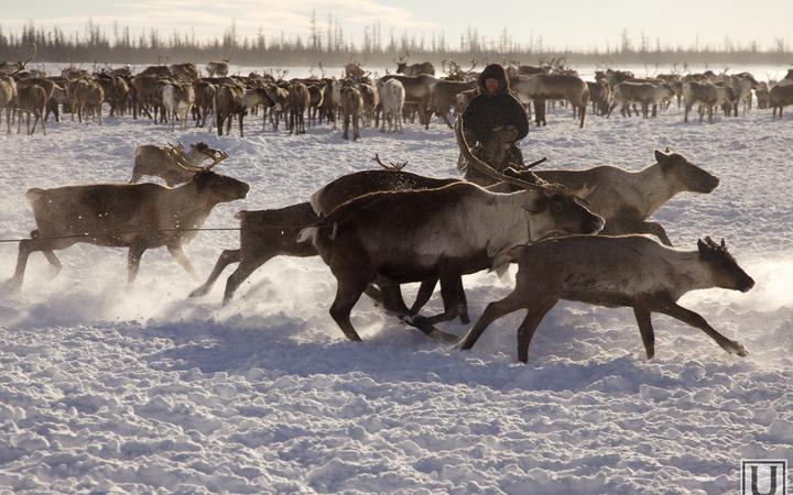 Кочевникам Ямала будут выдавать справки о ведении традиционного образа жизни