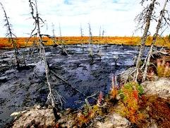 Комитет спасения Печоры: ЛУКОЙЛ не желает слушать жителей Коми
