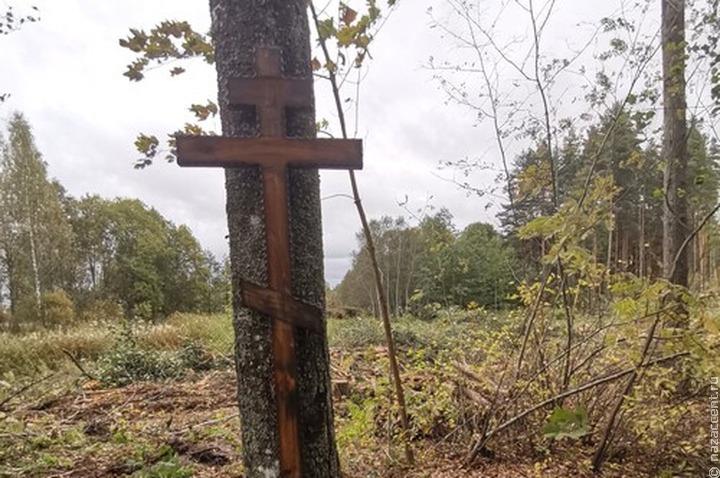 Вожане Ленобласти пожаловались на вырубку леса вокруг деревенского кладбища