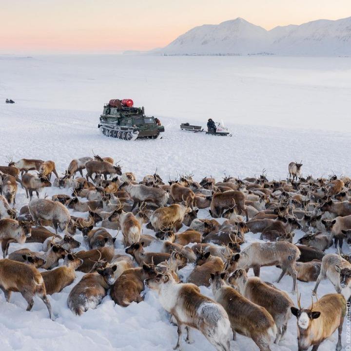 Новосибирский фотограф поделился фотографиями чукотских оленеводов