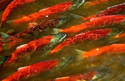 Камчатские аборигены попросили губернатора решить проблемы рыболовства