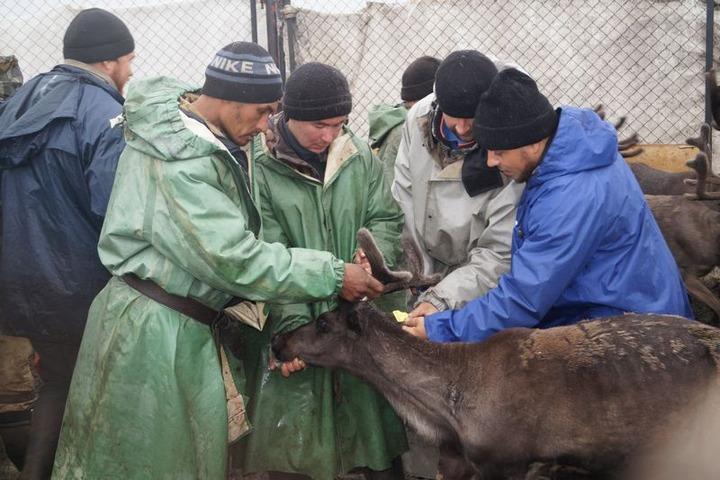 Этнографы изучили культуру коми, живущих на Ямале