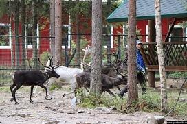 Этнодеревня с избушкой оленевода-охотника появится в резиденции карельского Деда Мороза