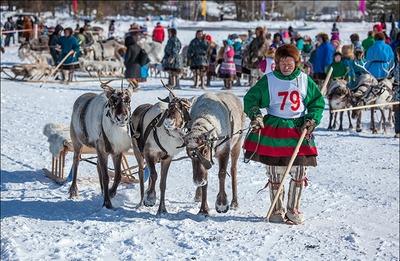 В Ханты-Мансийске выберут лучшего оленевода Югры