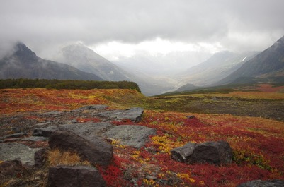 Союз оленеводов Ямала предложил создать федеральный реестр пастбищ