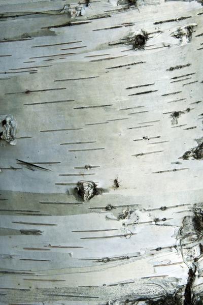 """Фольклорный фестиваль """"Свет бересты"""" стартует в Самаре"""