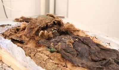 Ученые определят этническую принадлежность ямальской мумии