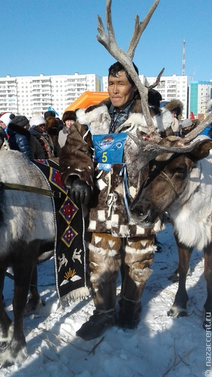 Оленеводы Ямало-Ненецкого округа примут участие в гонках на упряжках