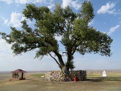 Одинокий тополь: священное место в Калмыкии