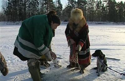 Родовую общину на Камчатке оштрафовали за вылов 1,4 тонны кеты без разрешения