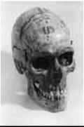 Политики и родственники Хаджи-Мурата  требуют от Кунсткамеры вернуть его череп