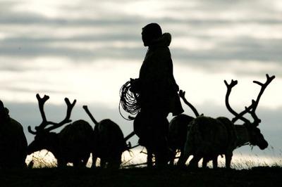 В Коми возобновили профессиональную подготовку оленеводов