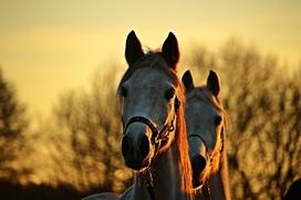 Самый массовый в мире конный поход в национальной одежде состоялся в Чечне