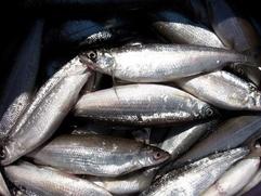 На Дальнем Востоке улучшат закон о рыболовстве