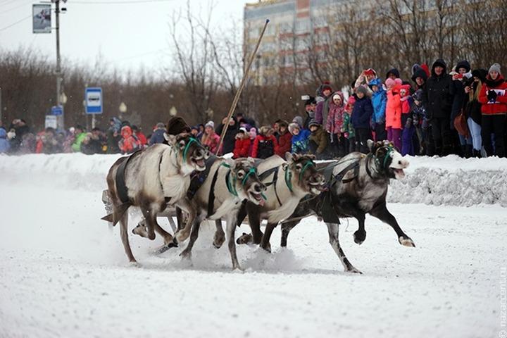 Праздник Севера в Мурманске впервые прошел без гонок на оленьих упряжках