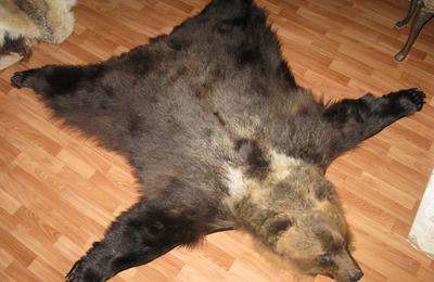 Аборигена на Ямале засудят за убийство медведя