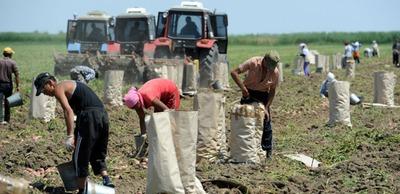 Госдуме предложат освободить от экзамена мигрантов, собирающих фрукты