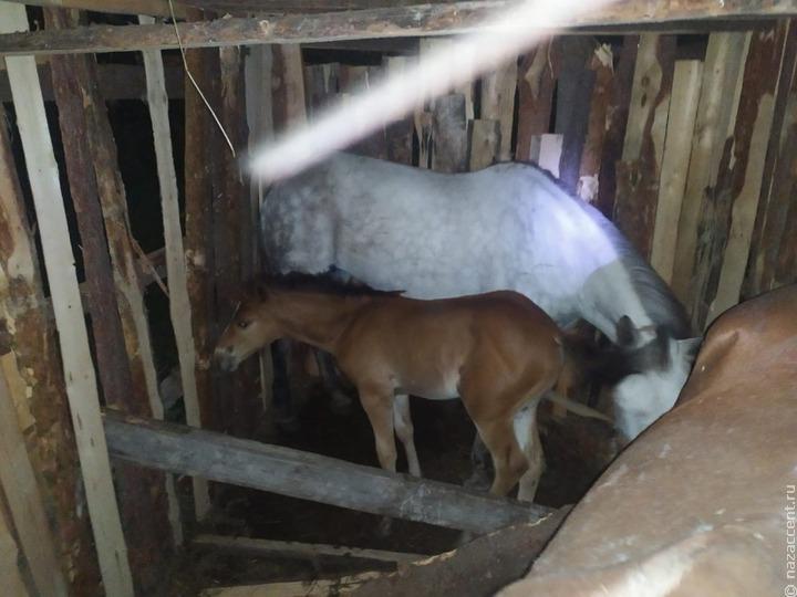 В Нижнем Тагиле нашли предположительно украденных цыганами лошадей