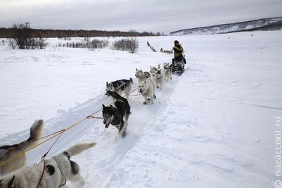 На Камчатке пройдут гонки на собачьих упряжках