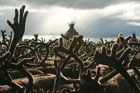 Нового главу Союза оленеводов Ямала выбрали в Салехарде