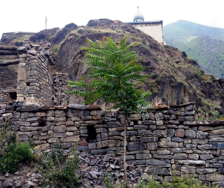 Дагестанский аул Миджах предложили сделать туристическим этноселом