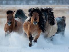 День коневода-табунщика впервые отметят в Якутии