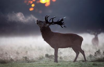 На Ямале привили от сибирской язвы более половины всех северных оленей
