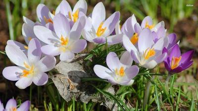 Азбука весны