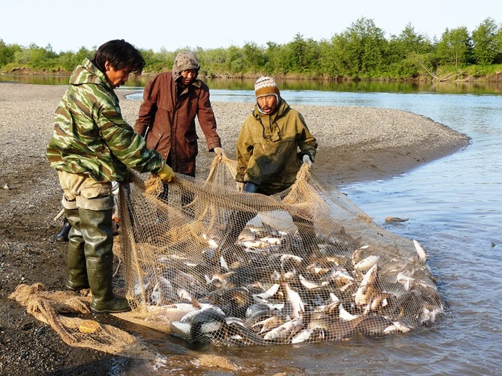 В НАО установили лимиты на добычу рыбы аборигенами