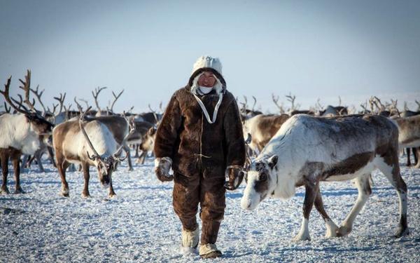На Ямале выпустили книгу в помощь оленеводам