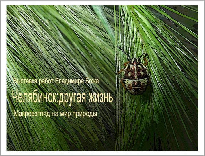 Новый взгляд на мир природы Челябинска