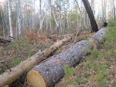 Директора саамской общины оштрафовали за захламление леса