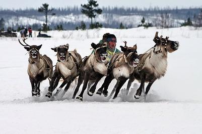 В Мурманской области отпраздновали День оленевода