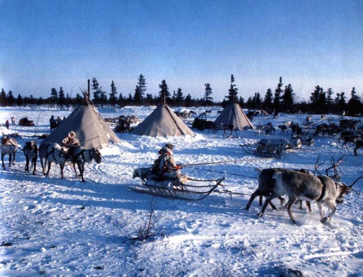 Регионам дадут 240 млн. рублей на поддержку коренных малочисленных народов