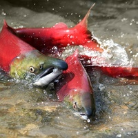 Пост и рыбий хвост