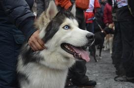 """Международная гонка на собачьих упряжках """"Северная Надежда"""""""