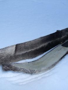 В Югре посоревнуются в беге на камусных лыжах и марийском бое петухов