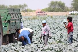 Депутаты Астраханской облдумы попросили увеличить долю мигрантов  в сельском хозяйстве